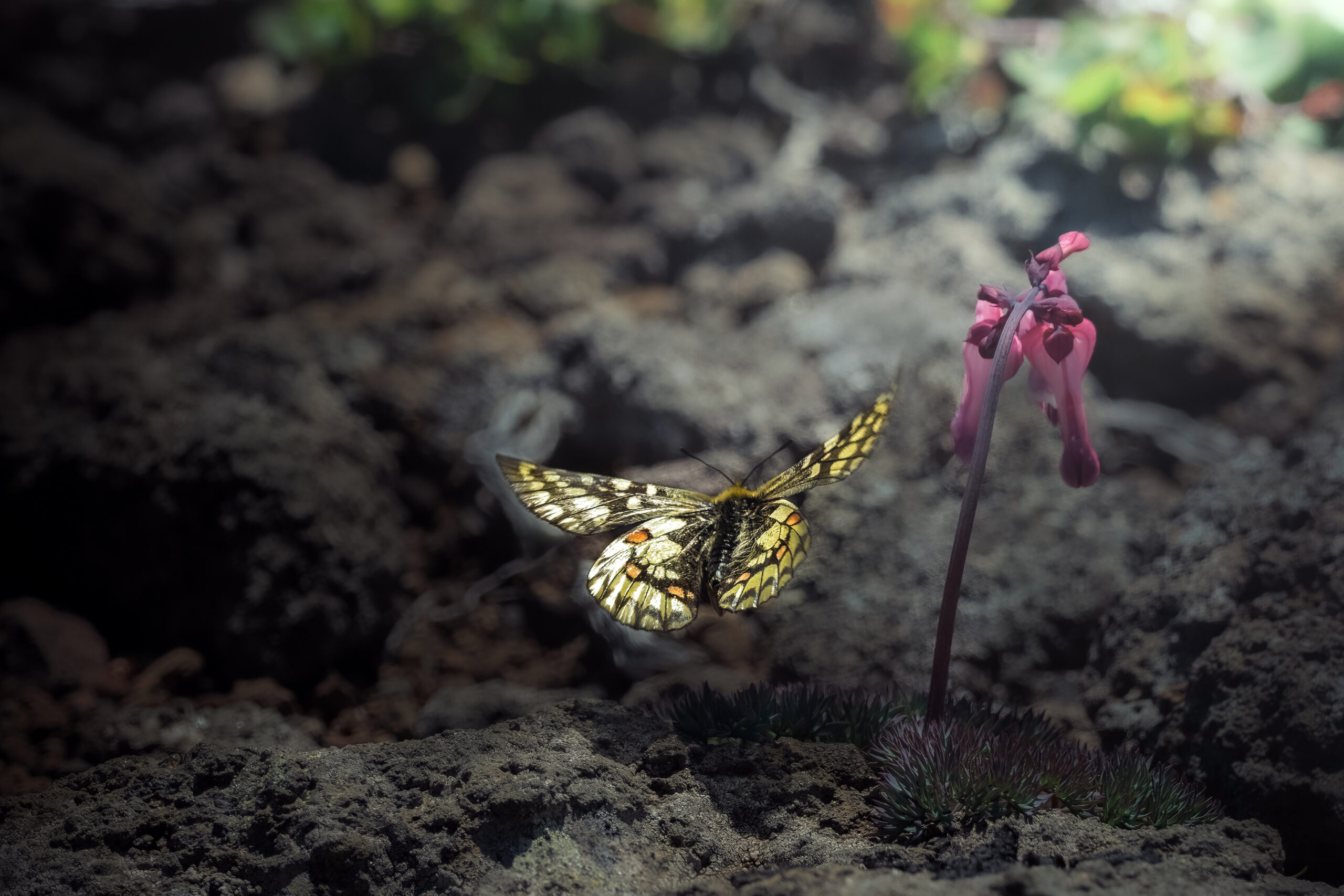 北海道の蝶 図鑑
