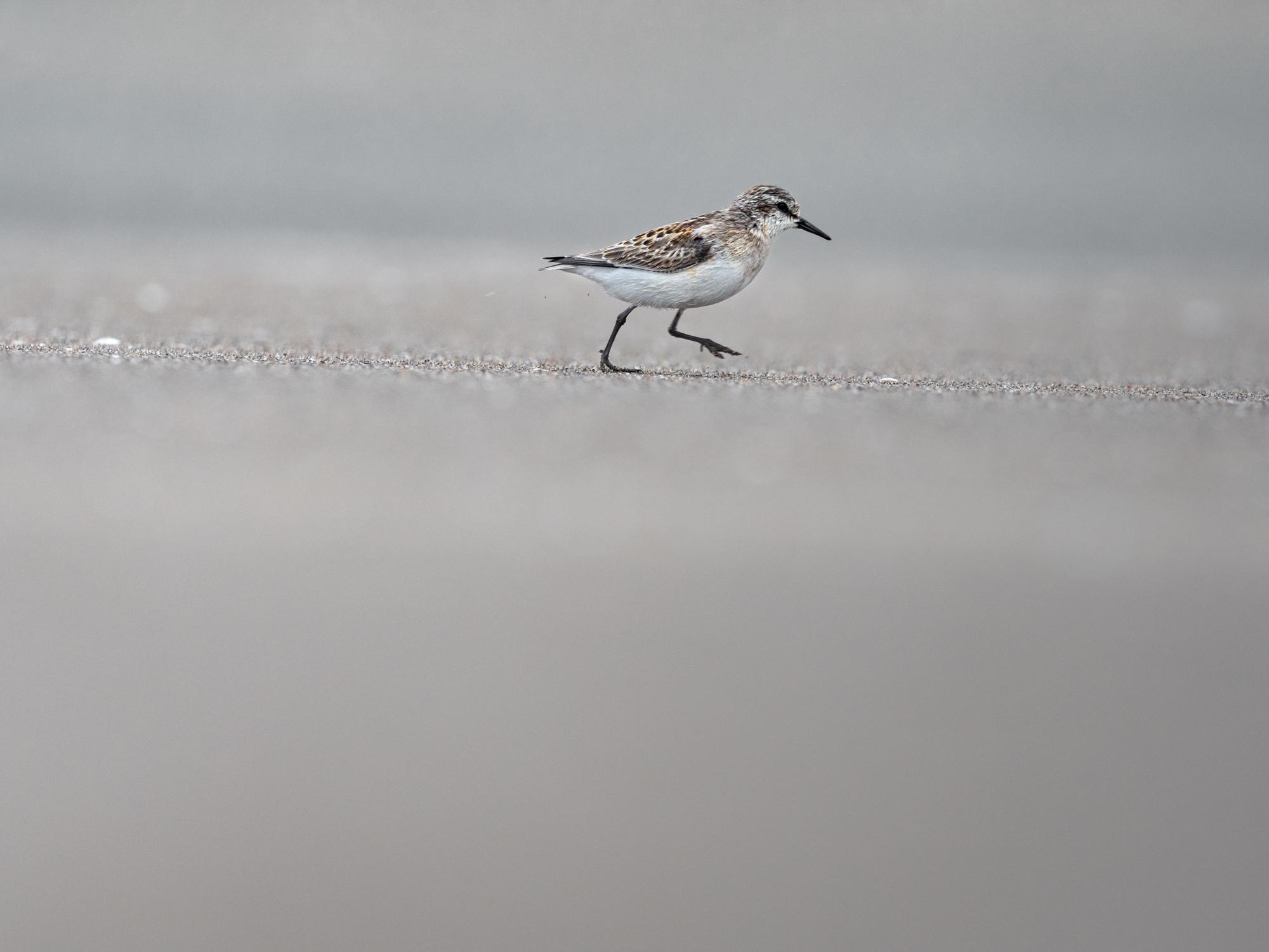 野鳥撮影に必要なカメラやレンズについて。